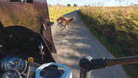 Wildunfälle vermeiden – Tipps für Motorradfahrer
